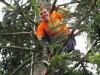wspinaczka-po-drzewach
